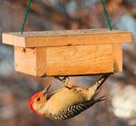 Suet Upside Down