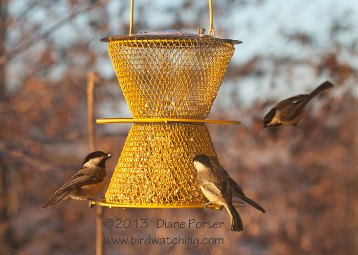 Designer Double Feeder